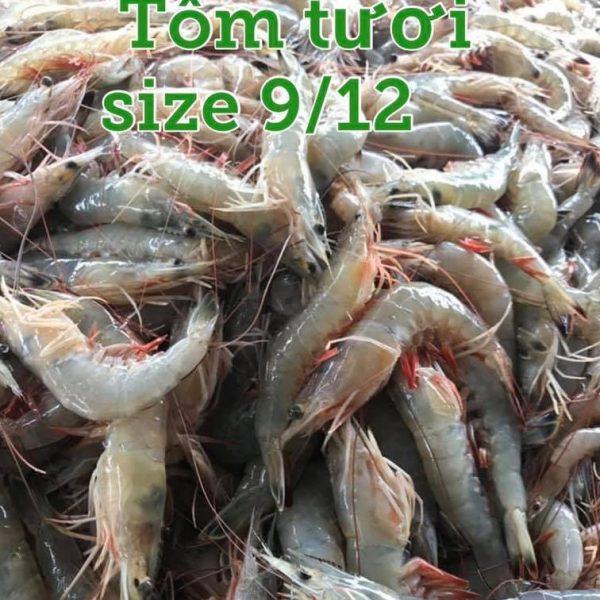 tom-tuoi-912